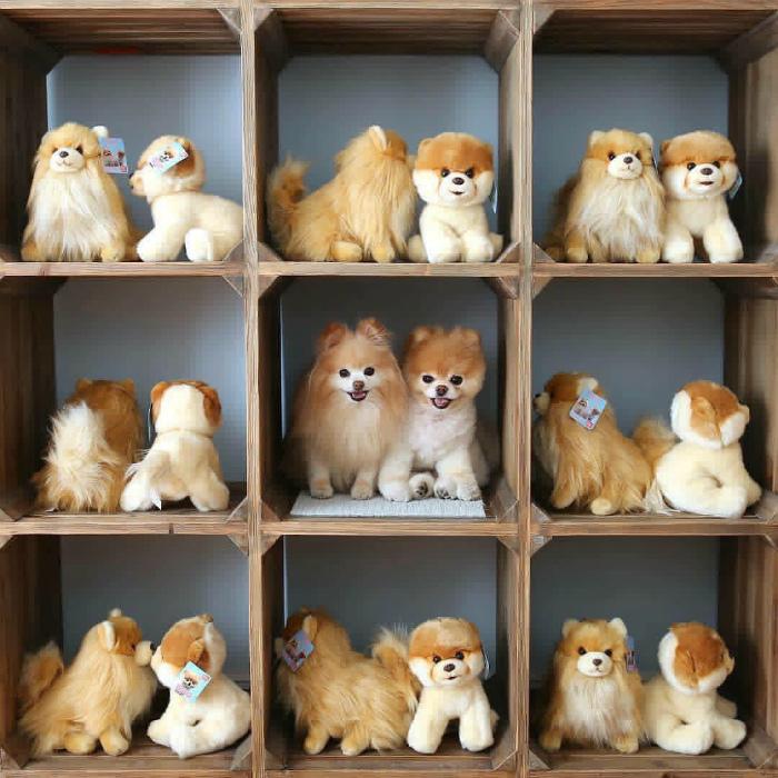 Собаки в мире игрушек. | Фото: JolyGram.