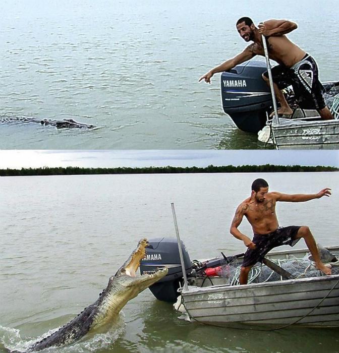 Разъяренный крокодил.
