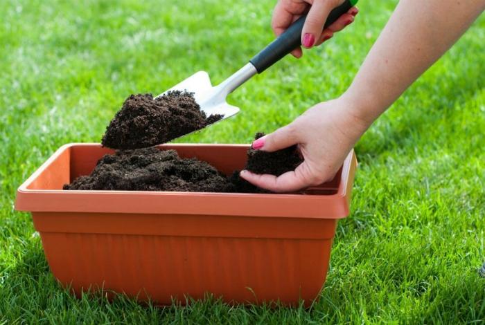Удобрение почвы отработанным кофе.