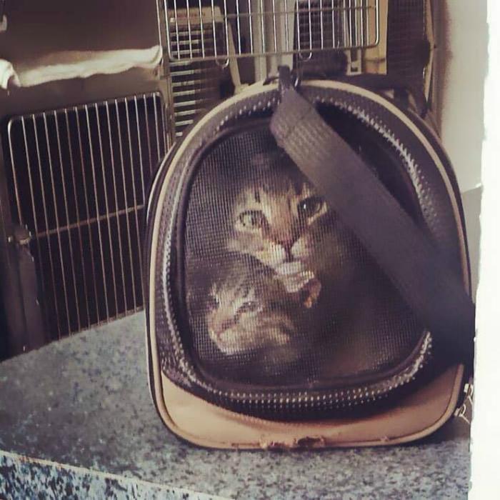 Коты в переноске.