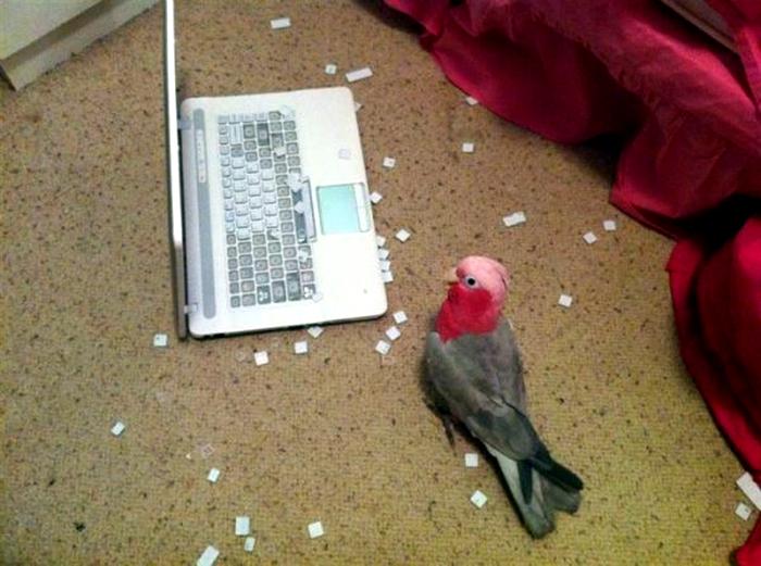 Разобрал клавиатуру.