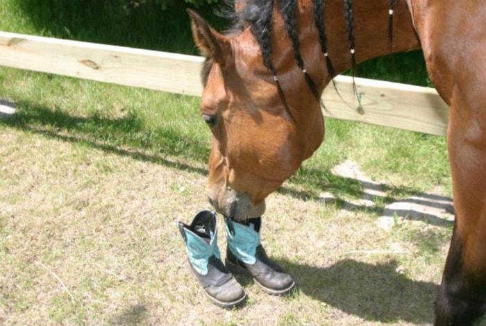 Плевок в ботинки.