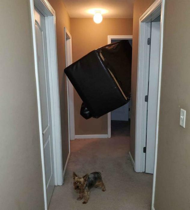 «Кто-то знает, как освободить диван?» | Фото: Sympa.