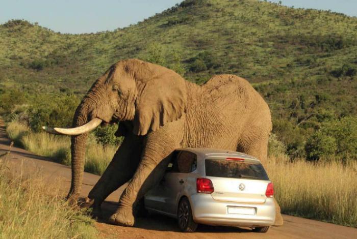 Встреча со слоником.
