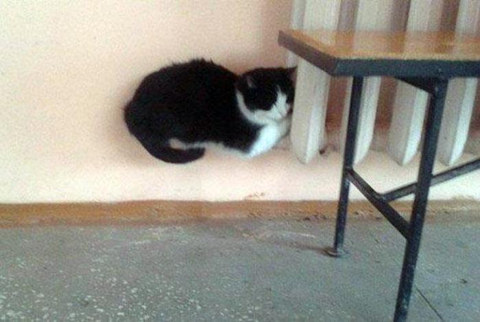 Парящий кот.