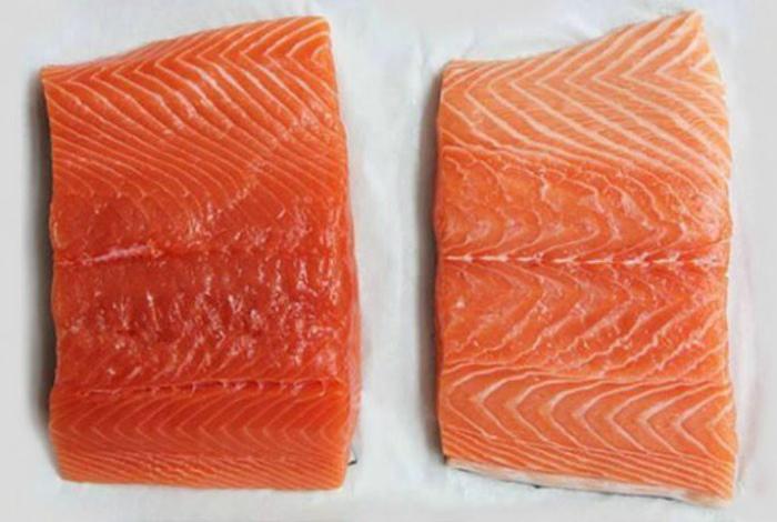 Норвежский или фермерский лосось. | Фото: Korysno.Pro.