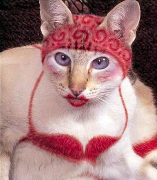 Гламурная кошка.