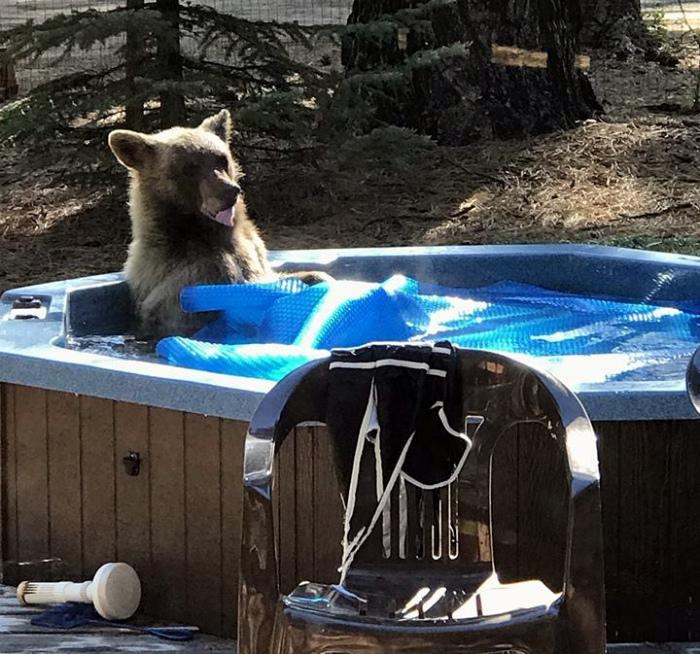 «Ну и что, что медведь! Я тоже мыться люблю!» | Фото: iCHIVE - theCHIVE.