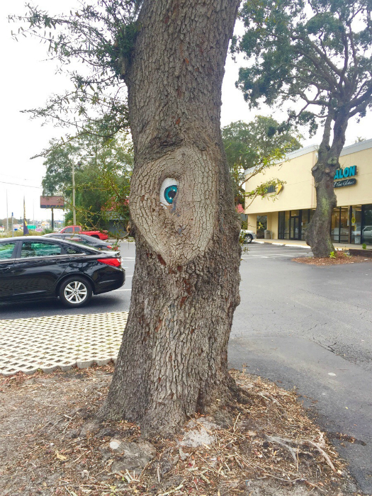 Дерево с глазом.