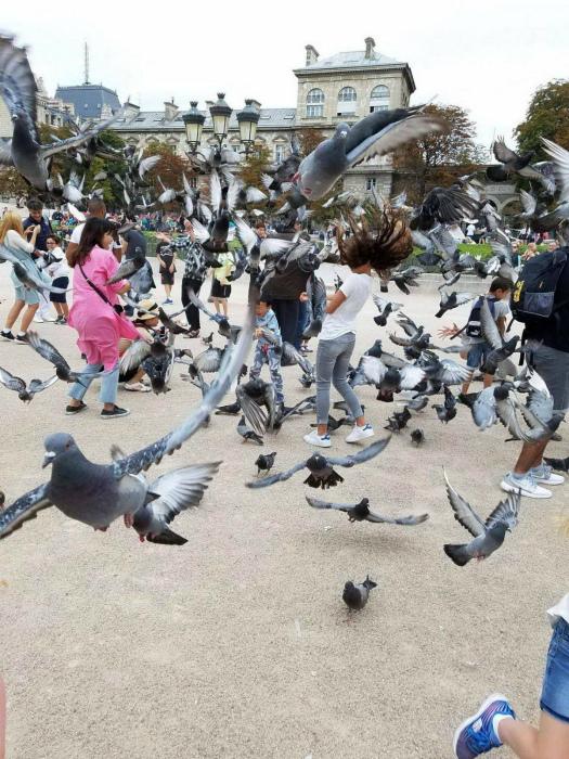 Голуби против туристов. | Фото: Zefirka.