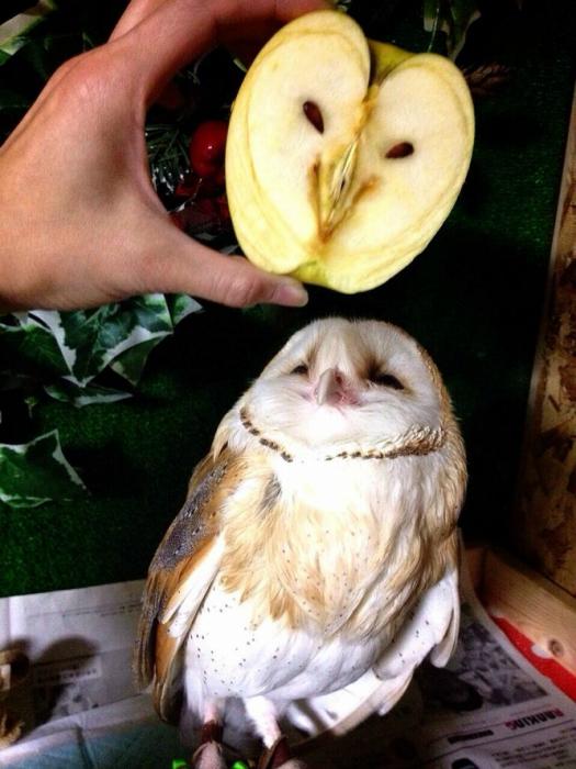 Разрезанное яблоко.