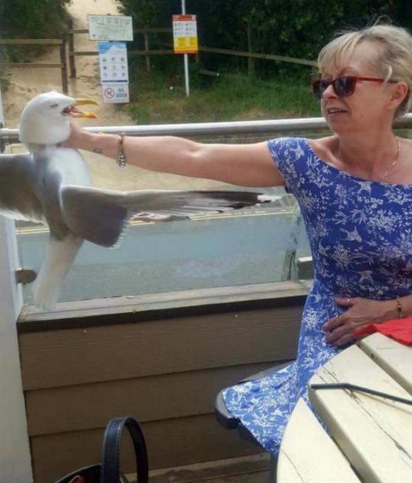 Натренированная женщина и чайка.   Фото: Taringa!