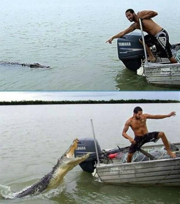 Милый крокодильчик.