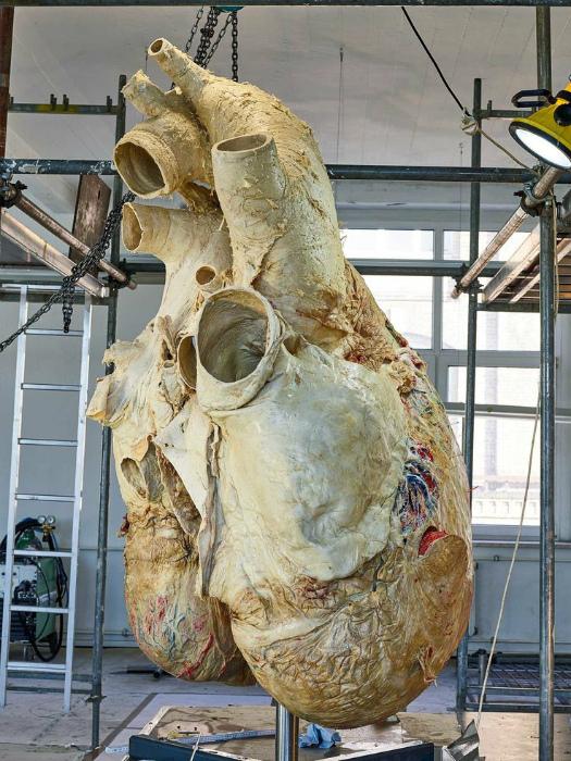 Огромное сердце.