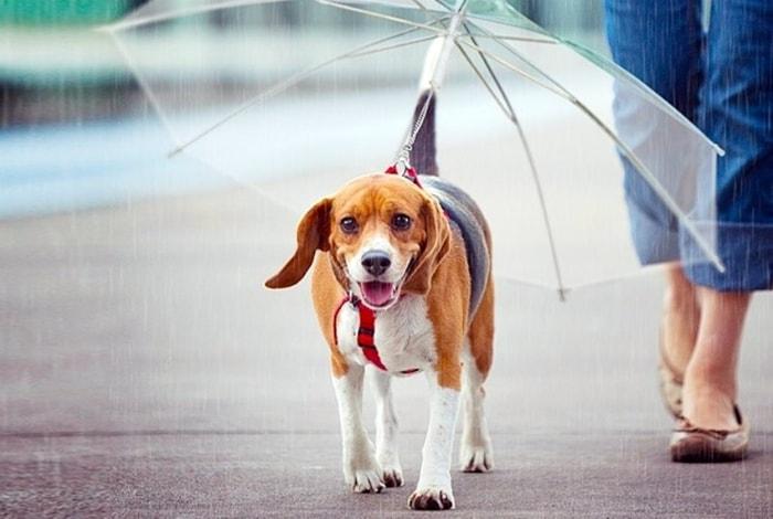 Поводок с зонтиком.