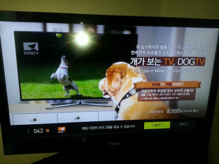Канал для собак в Южной Корее. | Фото: XopoM News.