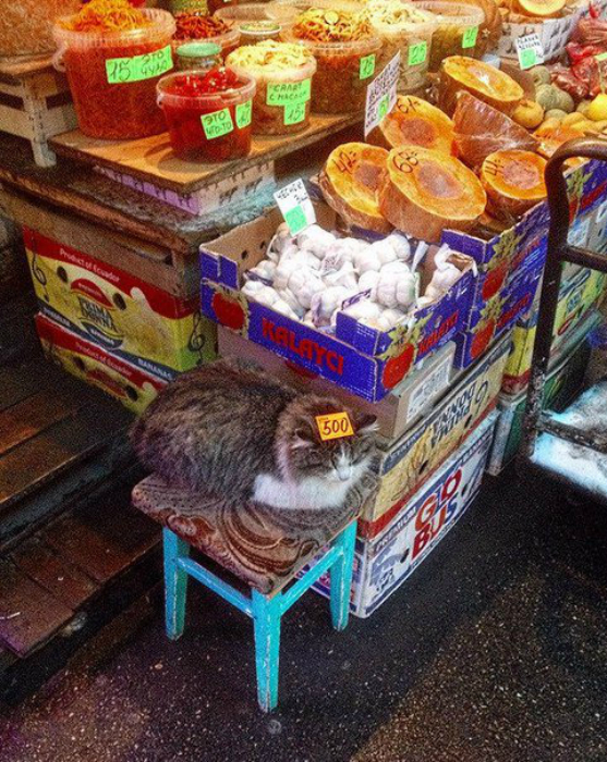 Кот в овощной палатке.