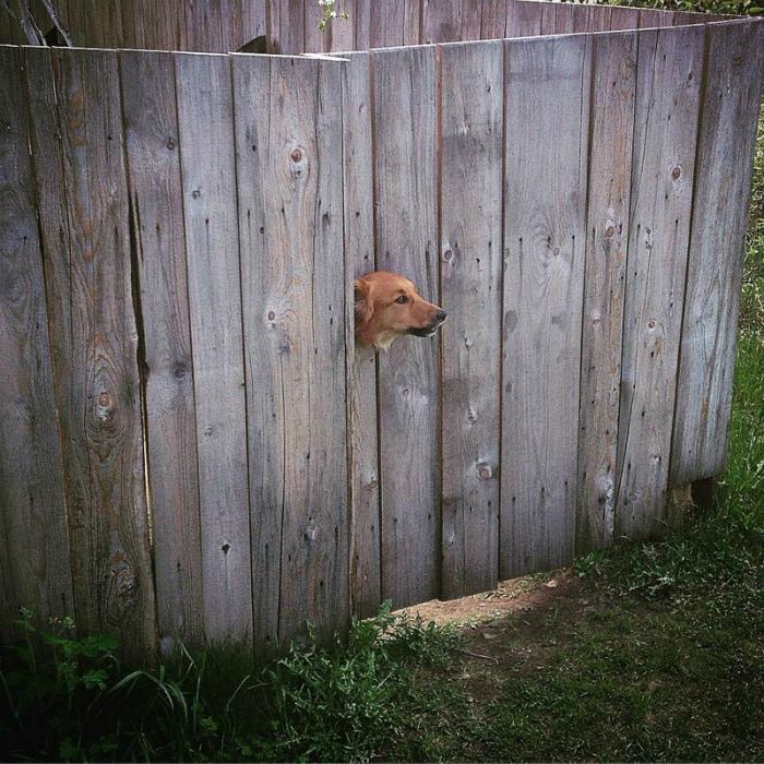 Собачий дозор. | Фото: Фишки.нет.