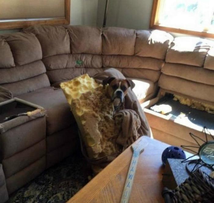 «Ууу, пахнет наказанием и покупкой нового дивана!»| Фото: MADE IN CCCP.