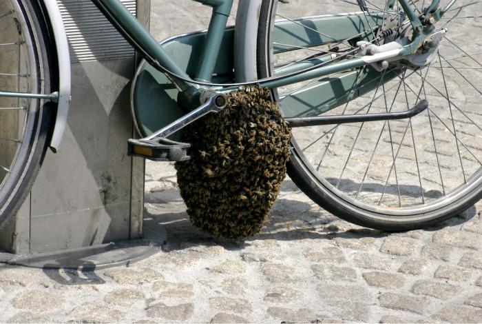 Рейдерский захват велосипеда.   Фото: Pinterest.