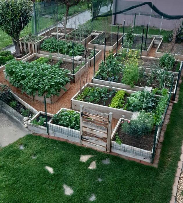 Аккуратный огород с высокими грядками.   Фото: Домоседы.