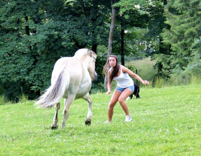 Агрессивная лошадка.