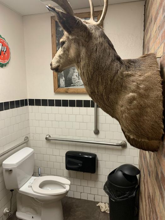 Симпатичная оленья голова. | Фото: Reddit.