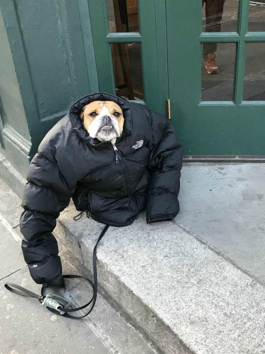 Собака в куртке.