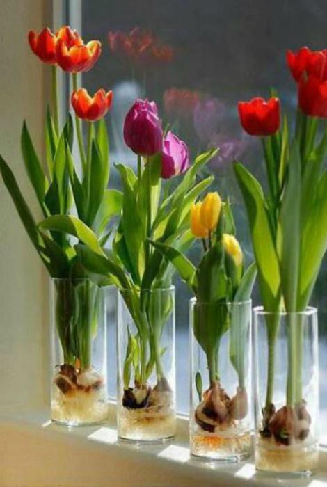 Цветы в стаканах.