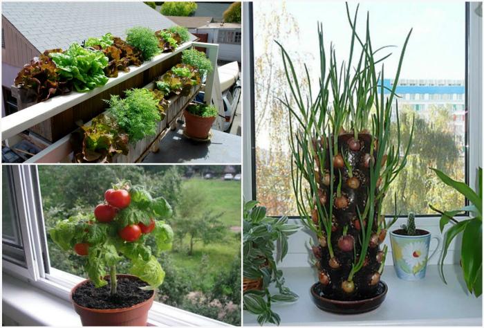 Выращивание овощей дома. | Фото: Розы и сад, Agronom.guru, Ковер своими руками.