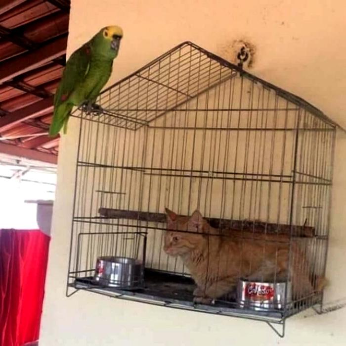 Я - вольная птица, а в клетке пусть этот четвероногий сидит!