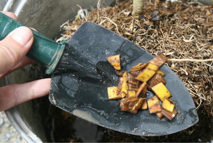 Банановая кожура для подкормки.