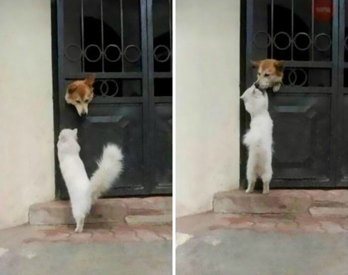 Ежедневные поцелуи.