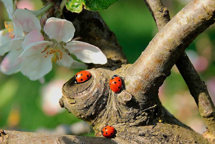Привлекаем в сад полезных насекомых.
