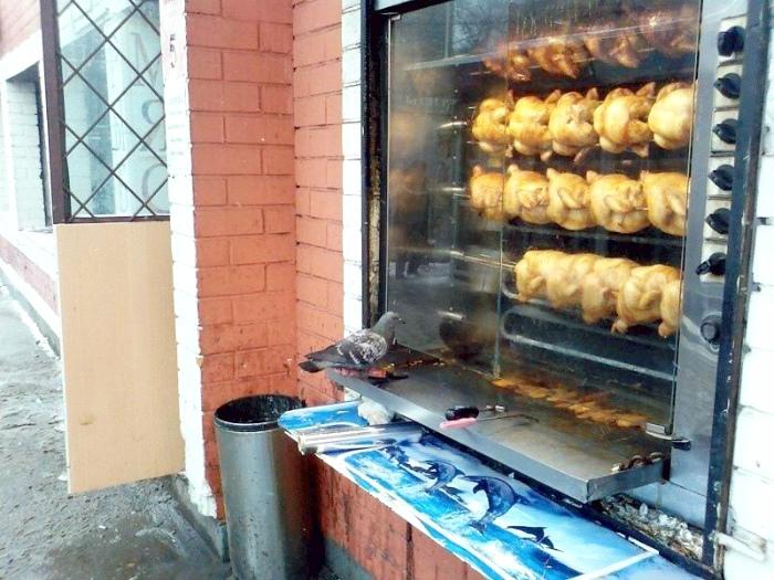 По мнению Novate.ru, этот голубь каннибал. | Фото: WordPress.com.