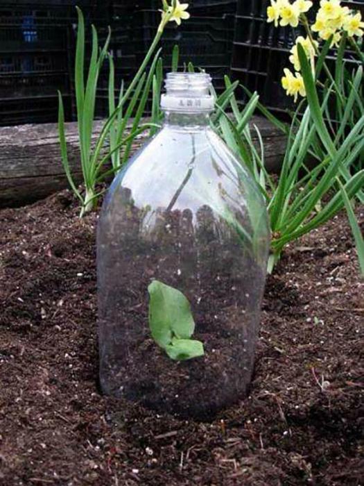 Колпак из пластиковой бутылки.