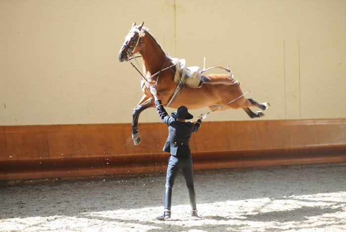 Ход конем в буквальном смысле.