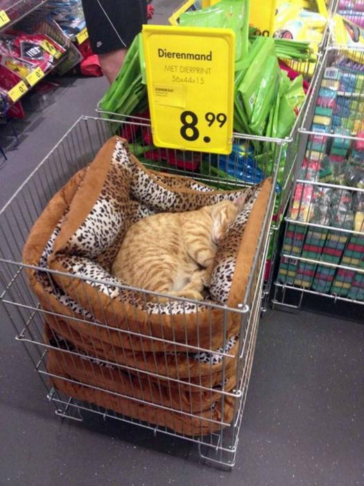 Кот рекомендует.