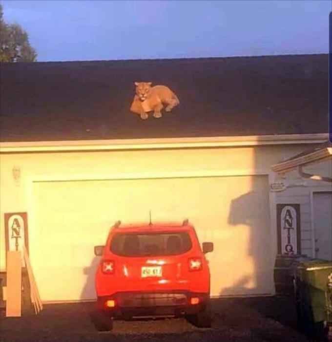 По мнению Novate.ru, лев на крыше - плохой знак! | Фото: Seanan's Tumblr.