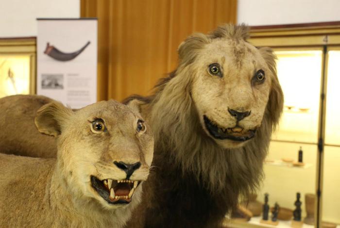 Только взгляните на эти удивленные мордочки львов. | Фото: Twipu.
