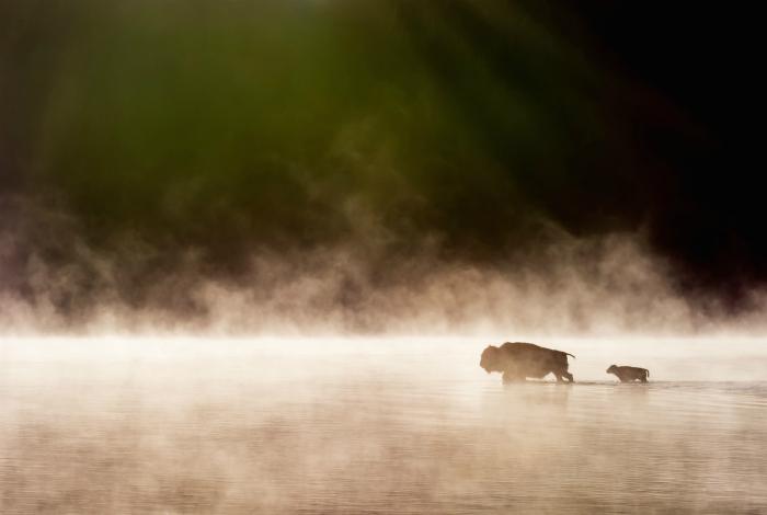 Утренний туман над парком Йеллоустон.