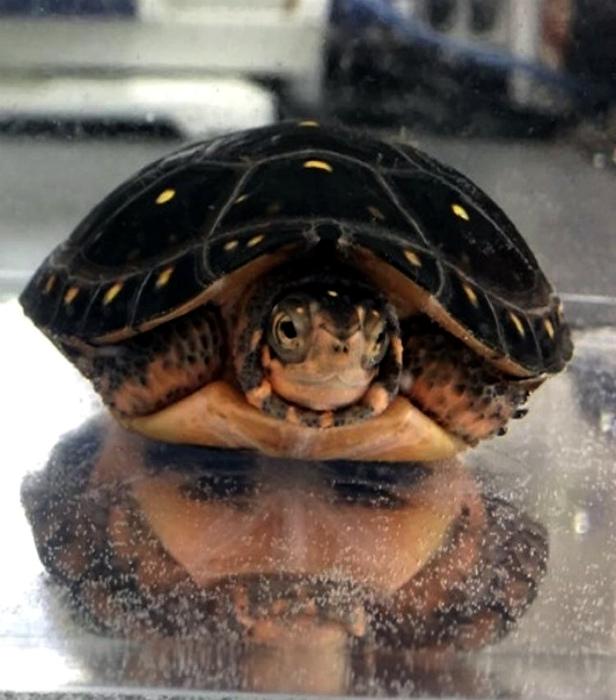 А черепаха не так-то и проста...