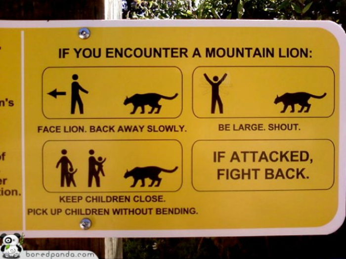 Что делать если на вас напал лев.