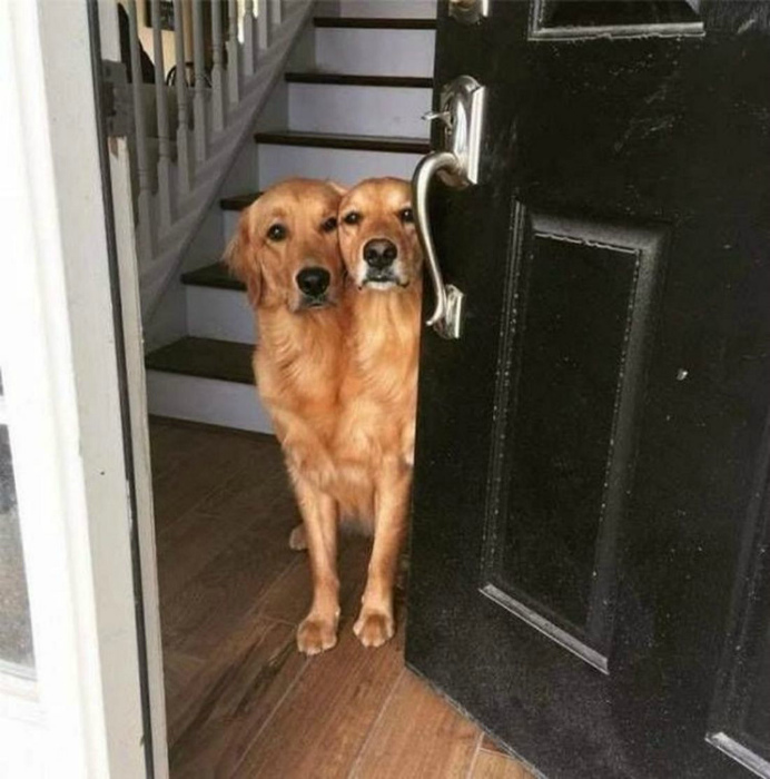 Сиамские близнецы или просто товарищи.