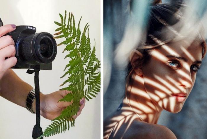 Растения и их тени. | Фото: Bota Sot.