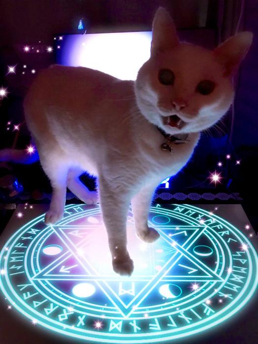 Этот белый кот выглядит весьма зловеще. | Фото: Wykop.