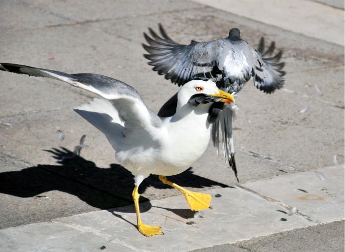 Попался, голубчик?