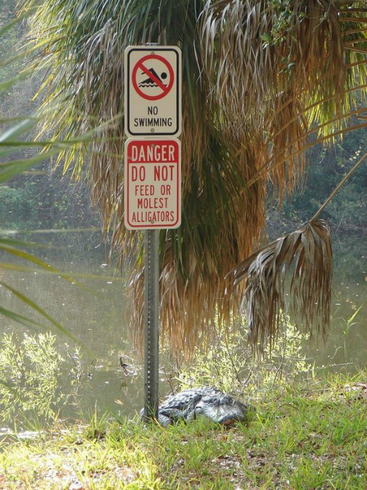 «Купаться запрещено». «Опасно! Кормить и дразнить аллигаторов запрещено!»