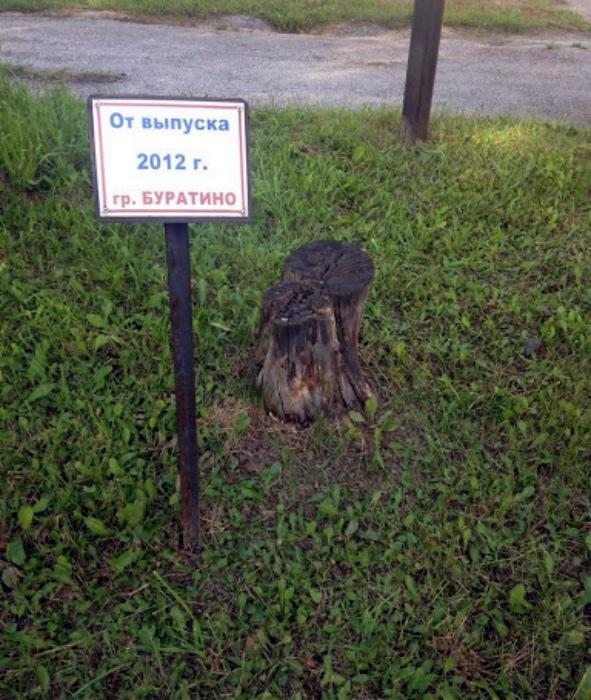 По мнению Novate.ru, дерево от группы «Буратино» было использовано по назначению... | Фото: БАгиня.