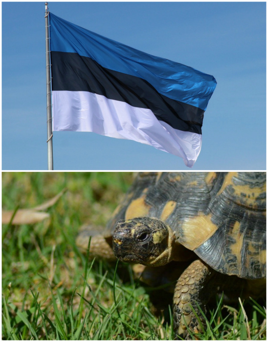 Эстонцы медлительные и заторможенные.